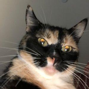 Meet your Posher, Cat lady